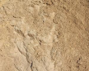 ลักษณะของดินทรายจะไม่อุ้มน้ำ