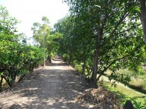 สวนผลไม้ ปทุมธานี