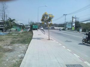ขายที่ดิน ถนนมัยลาภ ถมดินเรียบร้อยแล้ว เนื้อที่ 3 ไร่ 268 ตารางวา ราคาถูก
