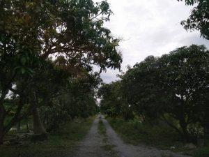 ถนนที่ถมด้วยหินคลุก ภายในที่ดิน แถวซอยร่มเกล้า ขนาด 4 ไร่ ถมที่ดินบ้างแล้ว