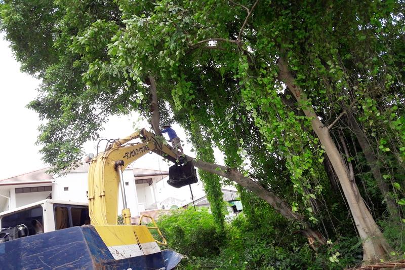 ให้คน ใช้เลื่อย ขึ้นไปเลื่อย ในส่วนของยอดต้นไม้ที่อยู่สูงสุดก่อน